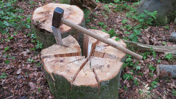 Zoom sur les travaux forestiers et les outils utilisés